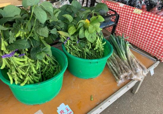 三浦半島の枝豆