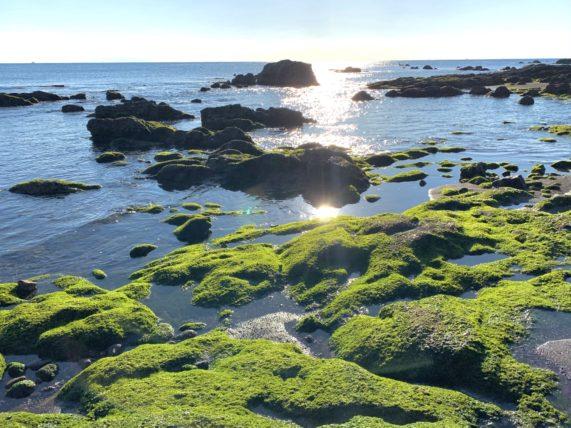 和田長浜海岸の磯