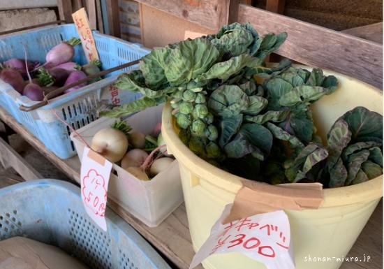 三浦半島の芽キャベツ