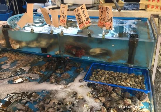 長井水産サザエ