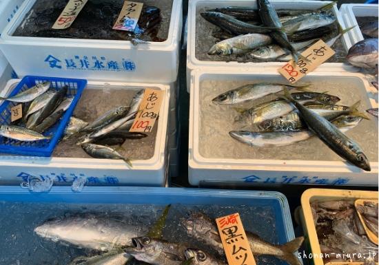 三浦半島地魚直売所