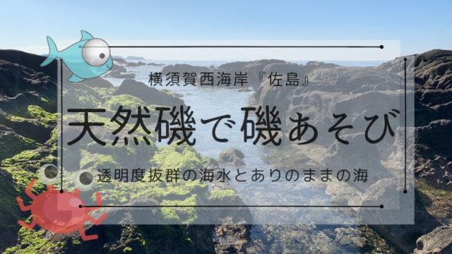 佐島天神島【磯遊びガイド】