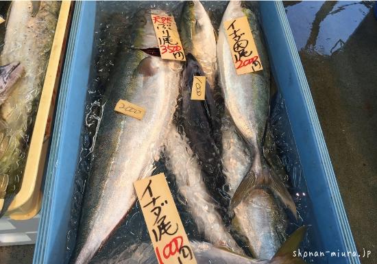 三浦半島鮮魚直売所