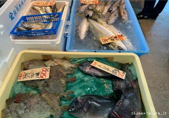 相模湾の鮮魚直売所