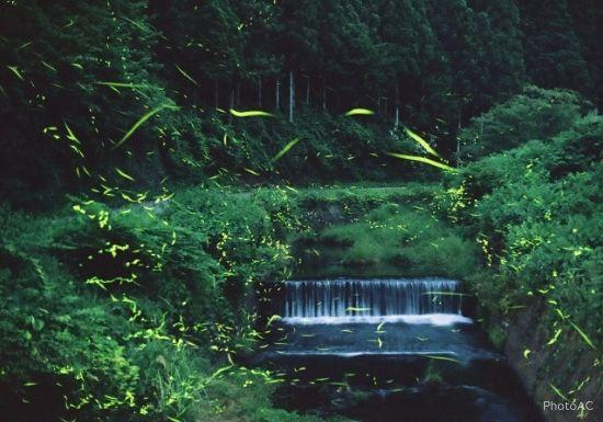 三浦半島で蛍ホタルを見る