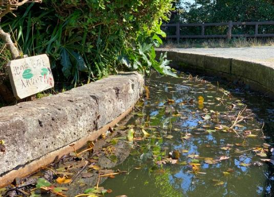 披露山公園の池