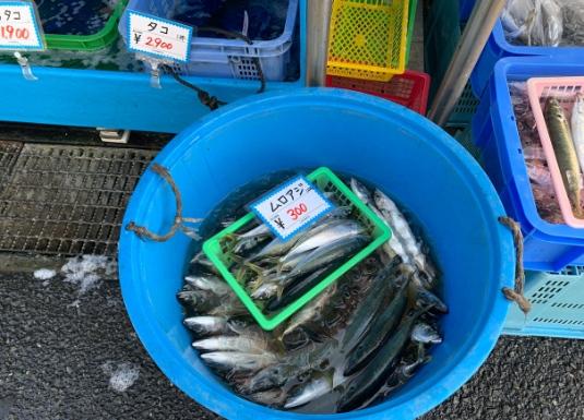 佐島漁港 ムロアジ