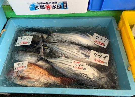 佐島の真鯛