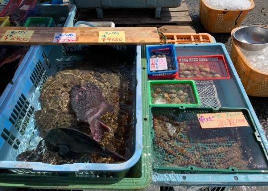 丸吉商店の活魚
