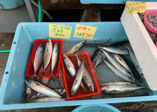 佐島産の地魚