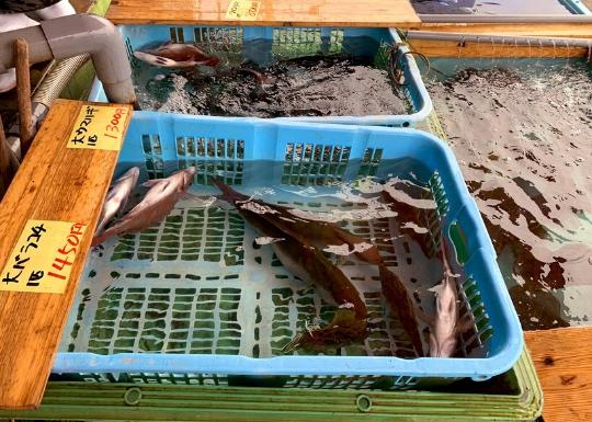 佐島の活魚