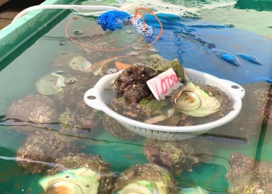 葉山町鮮魚直売所のサザエ