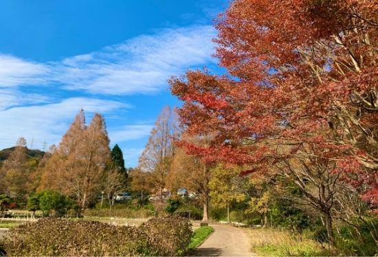 秋の菖蒲園