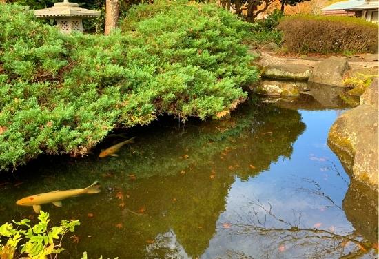 しょうぶ園の池
