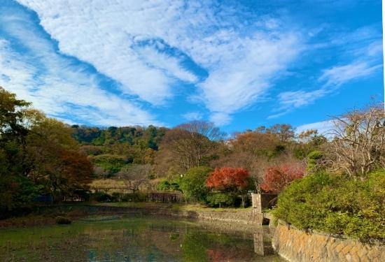 しょうぶ園の睡蓮池
