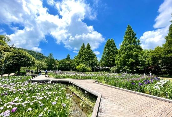 菖蒲園のボードウォーク