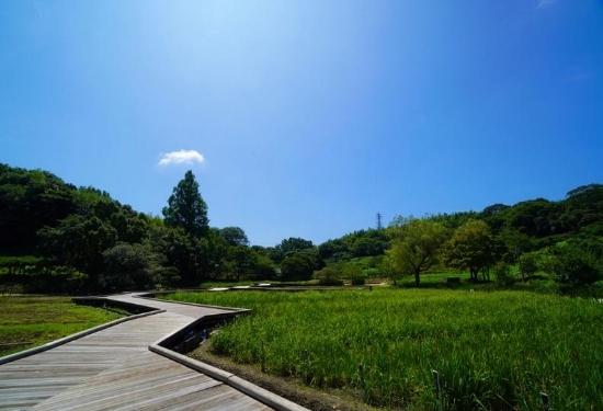 しょうぶ園の道