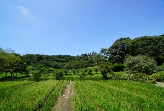 しょうぶ園里山の風景