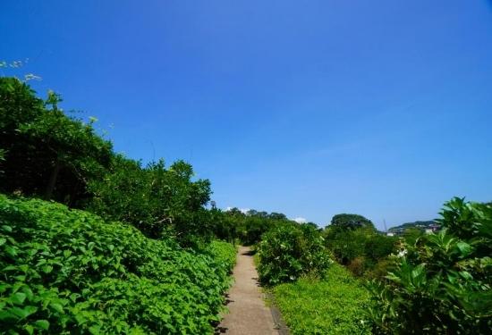 しょうぶ園の小道