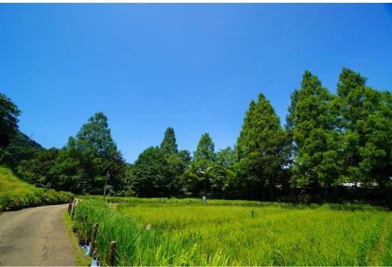 しょうぶ園の緑