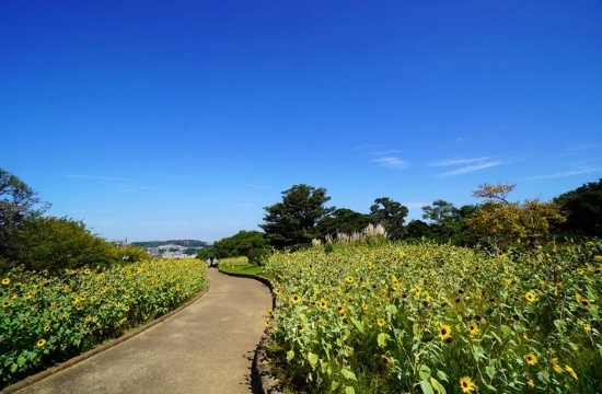 くりはま花の国遊歩道