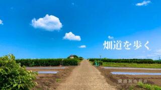 横須賀市長井のウォーキングコース