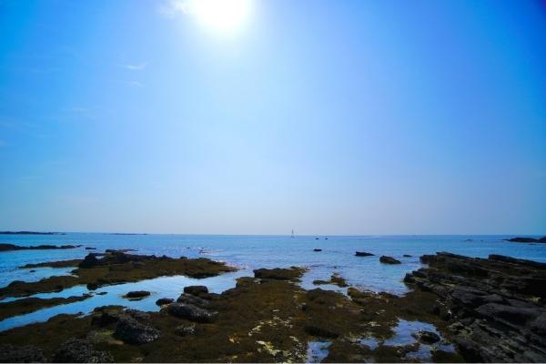 荒井浜海岸の磯